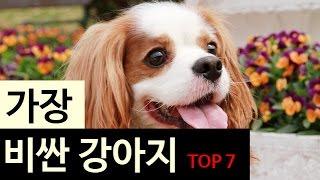 (랭킹박스) 가장 비싼 강아지 TOP 7