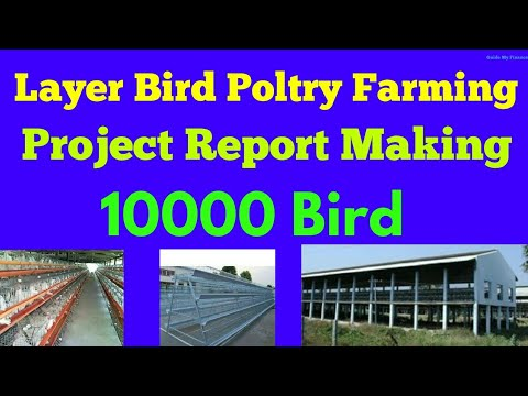 10000 Bird Layer Bird Poultry Project Report | How to prepare Layer bird  Poultry Project Report