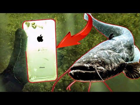 MONSTER WELS (2m) & IPhone bei SCHATZSUCHE Unterwasser mit METALLDETEKTOR gefunden!! Sondeln/Tauchen