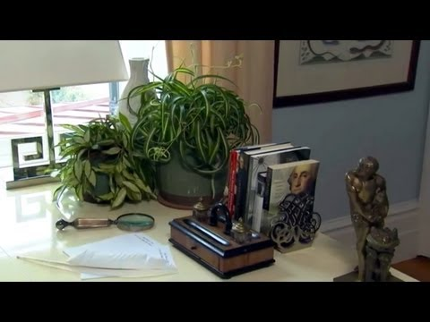 Air Purification House Plants | At Home With P. Allen