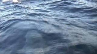 delfini.mpg