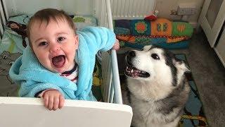 My Huskies Helps My Baby Smile Every Single Morning!!...