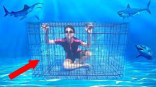 $10,000 اخر شخص يخرج من القفص تحت الماء يربح