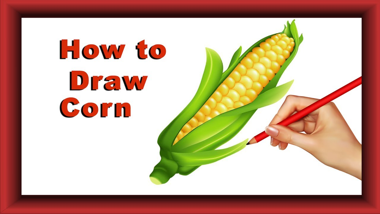 how to draw corn step by step