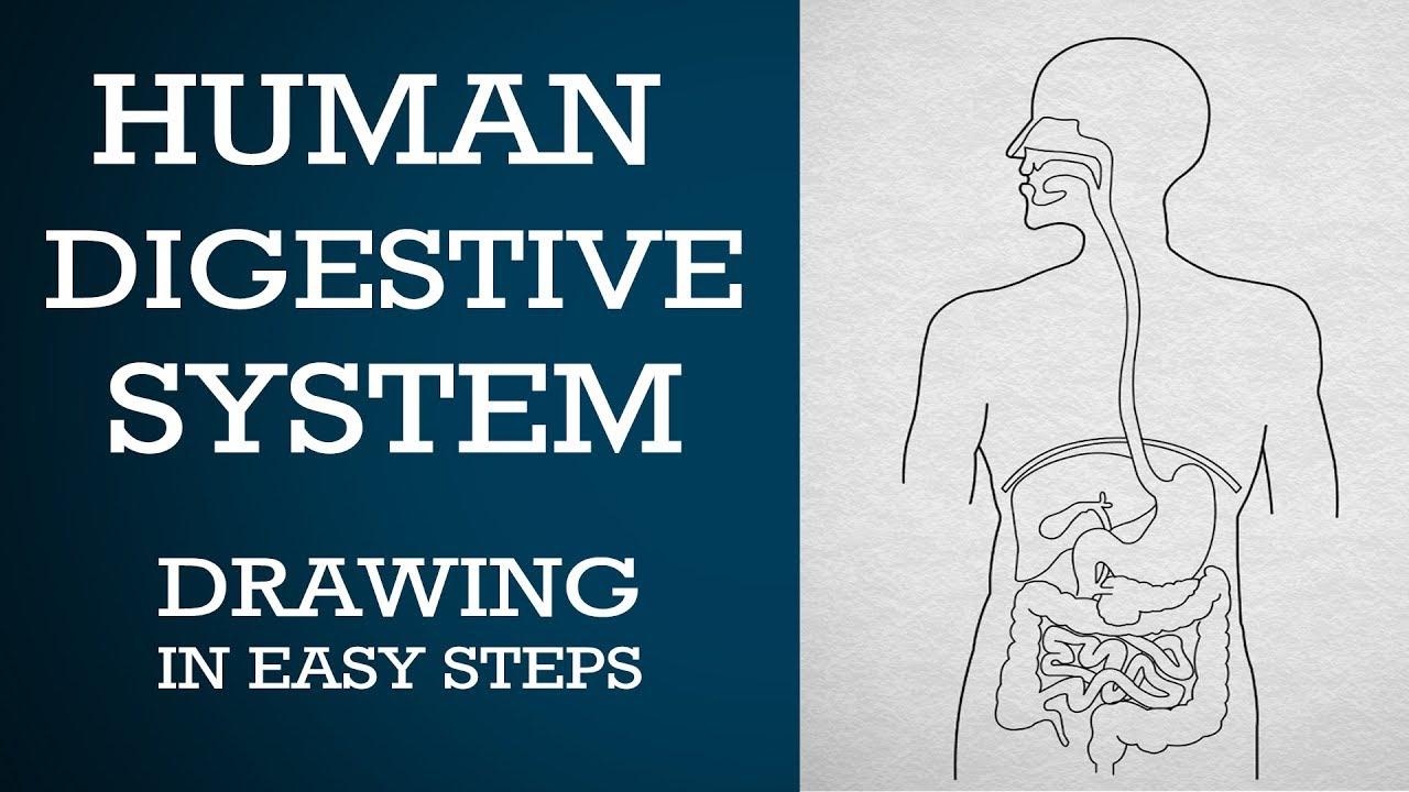 easy way to draw human digestive system life processes ncert class 10 science cbse biology [ 1280 x 720 Pixel ]