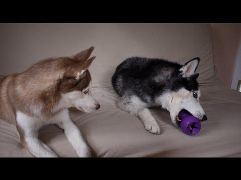 MISHKA, GIVE ME MY TOY!!!!
