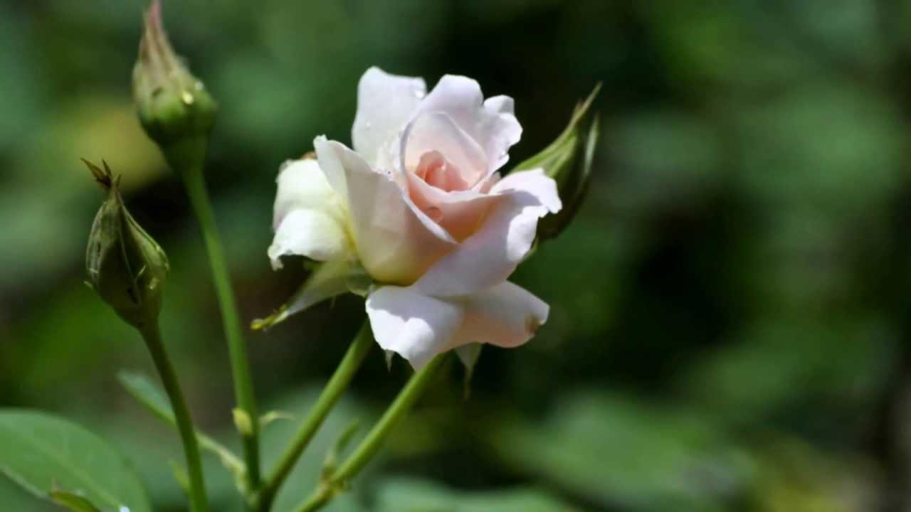 Musica se llama amistad con imagenes de flores youtube - Fotos jarrones con flores ...
