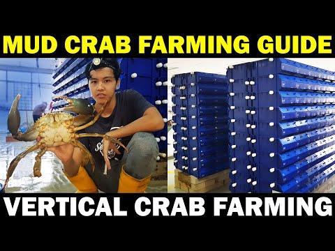 MUD CRAB FARMING | Vertical Crab Farming