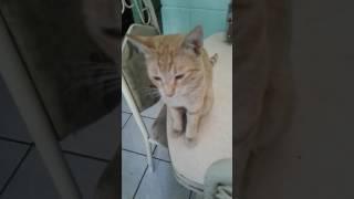 Mi gato habla dice agua...