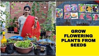 How to grow flowering plants from seeds.విత్తనాల నుండి పూల మొక్కలను పెంచుకోవడం ఎలా #howtogrow #tips