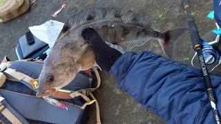 Попал На Раздачу ТЕРПУГА часть1 Rockfishing