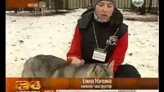 Собаки Хаски лечат детей инвалидов