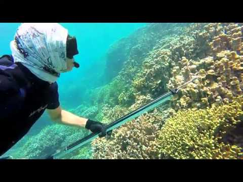 Majuro Atoll, Marshall Islands, Spearfishing, Feb 2015, Berger