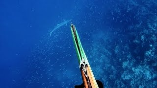 Chasse sous marine nouvelle caledonie / Spearfishing - 04-2017