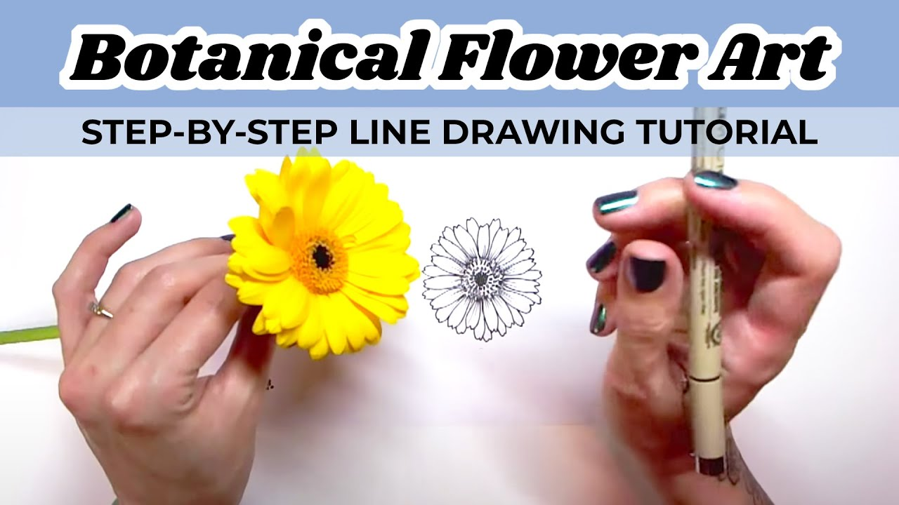 Line Drawing Step By Step : Step by line drawing botanical flower art tutorial youtube