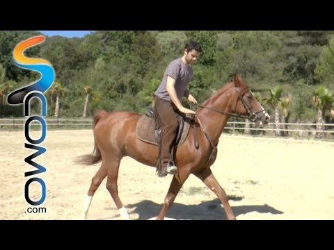 Cómo trotar a caballo