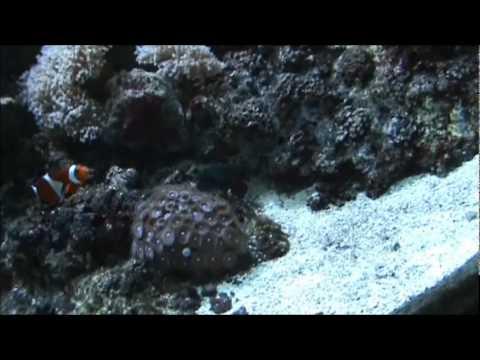 Shedd Aquarium, Chicago Illinois July 4th