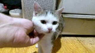 тест-драйв корма для кошек из Ашана
