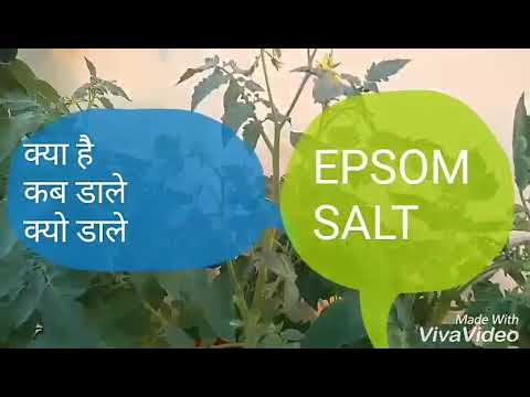 No_137 What is/When/why to use Epsom salt/ magnesium sulfate in plants /gardening.(Hindi/Urdu) .