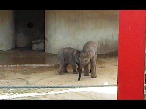 Pilar y Vera. Crias de elefante. Zoo Aquarium de Madrid