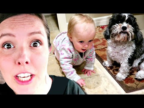 Should We KEEP the DOGS?!
