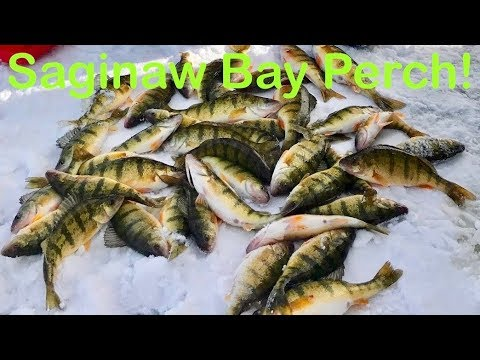 Saginaw Bay Michigan Perch And Walleye.