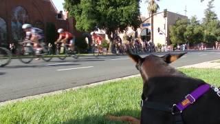 Bike Race Doberman