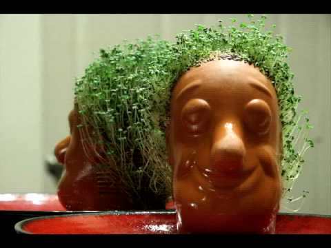 Life And Death Of A Chia Pet Youtube