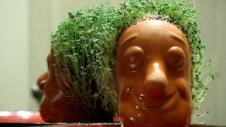 Life and Death Of A Chia Pet