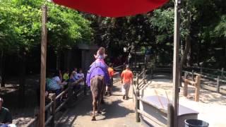 Camel ride Bronx zoo