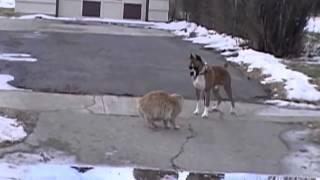 Кот против собаки Cat against Dog