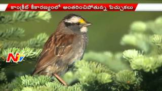 World Sparrow Day Special | NTV
