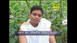 Ayurvedic use  Thorn Apple (Dhatura)