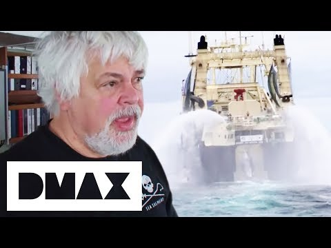 Harpoon Ship Kills Whale In Front Of Sea Shepherds | Whale Wars
