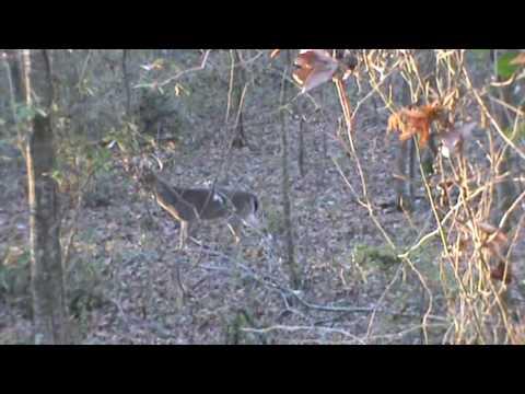 Big Black River, Mississippi Deer Hunt