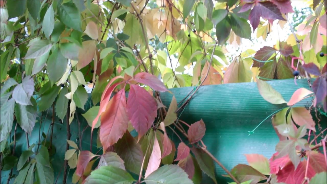 Осень в моем саду - YouTube