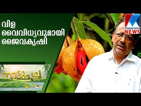 Organic farming with crop variety | Nattupacha   | Manorama News