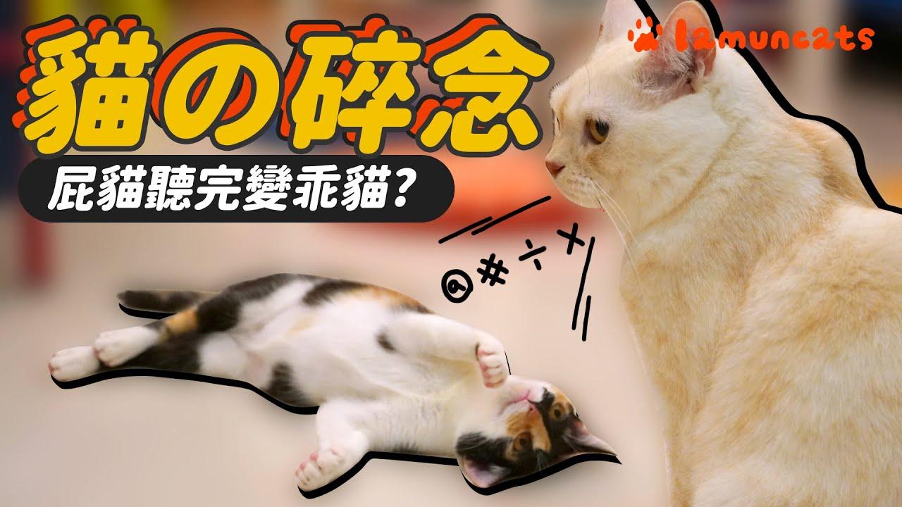 大貓騎小貓?俊男形象很母湯 會講人話的貓咪┃拉姆有幾噗 ♧