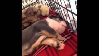 Приколы! Лучшие подборки смешных собак и щенков за Февраль 2014 Funny Pets Compilation