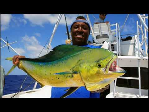 economy of the bahamas