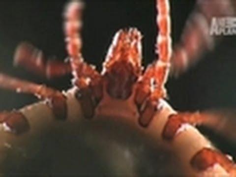 Room Full of Ticks | Infested!