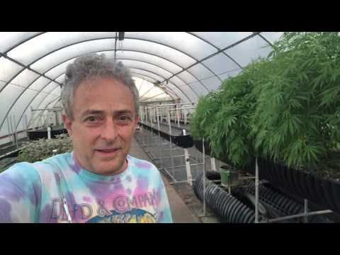 Growing hemp in the Biofarm; Why bioponics is a more sustainable method of organic farming.