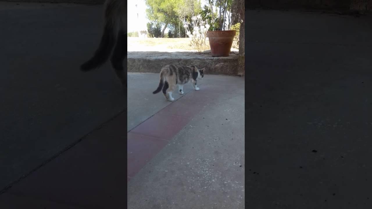 Gatti Cattivi Youtube