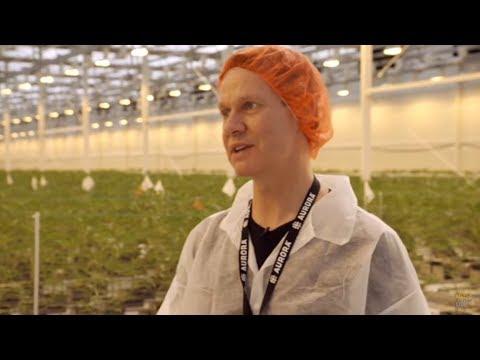 Site Visit: Aurora Cannabis Inc (TSE:ACB) Launches Best-in-Class Aurora Sky Facility