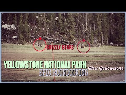 Epic West Yellowstone Boondocking Spot| Grizzly Bears and lots of Bison| Custer Gallatin NF Part 1
