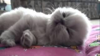 Sevimli Yavru Kedi & cute kitten