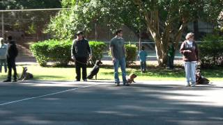 Puppy Obedience Training In Nc - North Carolina Dog Training