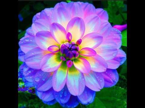 Violet Flower Hd Wallpaper The Prettiest Flower In The World Youtube