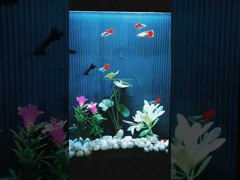 How To Make A Guppy Fish Aquarium Using A Old Scaner | സ്കാനർ അക്കോറിയം
