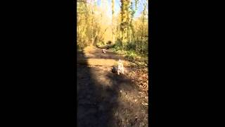 Pug Fails At Log Jump Attempt